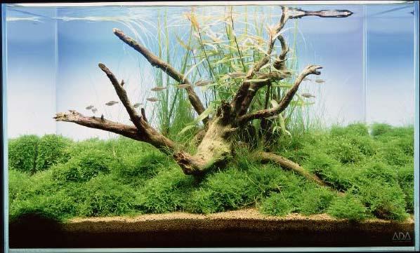Akvárium jako umění